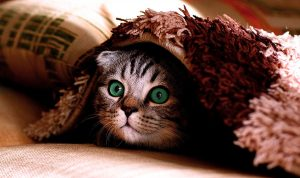Cat hiding under blanket - impostor syndrome - image - Pixabay